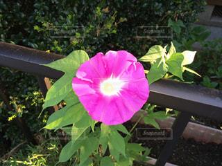 花の写真・画像素材[430286]