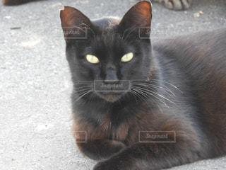 猫の写真・画像素材[608191]