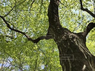 グリーンの写真・画像素材[434501]