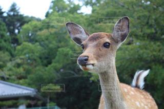鹿さん - No.764564