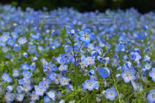 近くの花のアップの写真・画像素材[1198361]