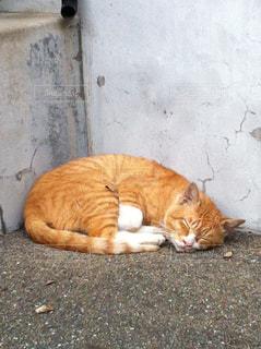 猫の写真・画像素材[427386]