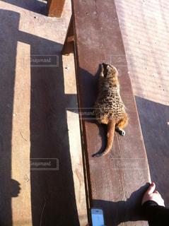 猫の写真・画像素材[427394]