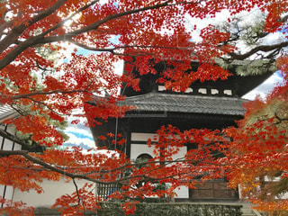 東福寺の紅葉の写真・画像素材[875575]