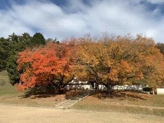 閑谷学校の紅葉の写真・画像素材[2745020]