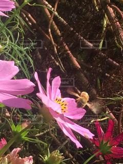 花の写真・画像素材[424228]