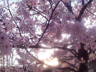 春の写真・画像素材[425908]