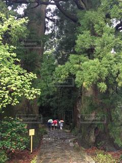 和歌山の写真・画像素材[438061]