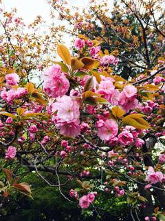 花の写真・画像素材[432714]