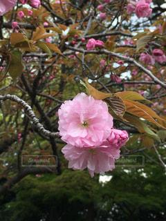 花の写真・画像素材[432715]