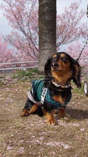 犬の写真・画像素材[425224]