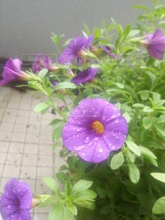 花の写真・画像素材[425350]