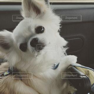 犬の写真・画像素材[564798]