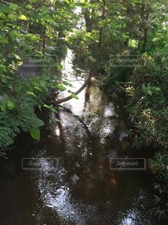 小さなジャングルの写真・画像素材[426746]