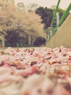 春 - No.434125