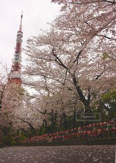 春 - No.434128