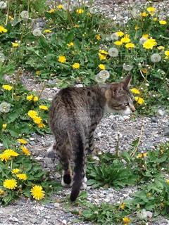 猫の写真・画像素材[427189]
