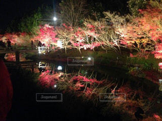 夜の写真・画像素材[427805]