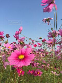 花の写真・画像素材[426620]