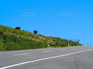 四国カルストの写真・画像素材[982719]