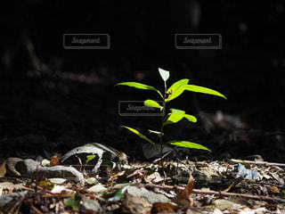 近くの花のアップの写真・画像素材[1059489]