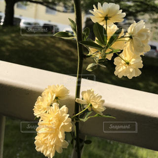 #花*花の写真・画像素材[461552]