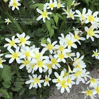 #花*花の写真・画像素材[461555]