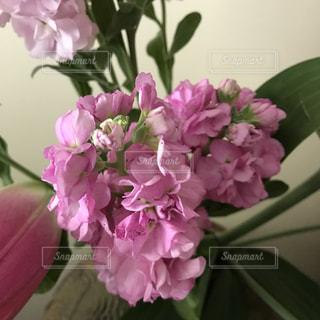 #花*花の写真・画像素材[461556]