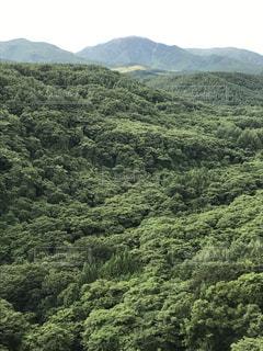 森林 - No.673638