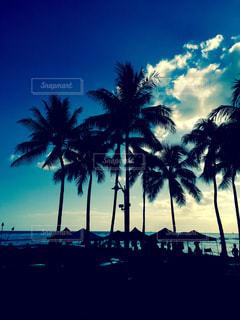 夏の写真・画像素材[427023]