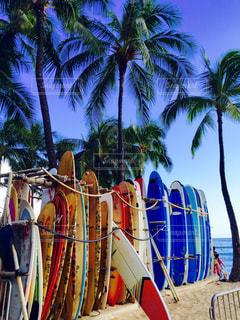 サーフィンの写真・画像素材[478896]