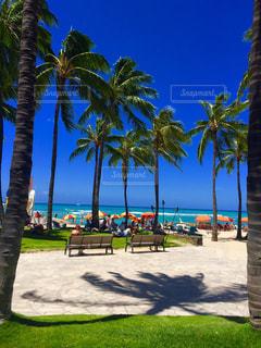 ヤシの木とビーチ - No.748673