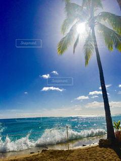 ヤシの木とビーチ - No.748674