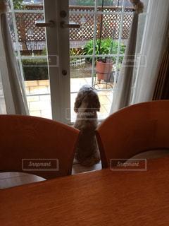 窓の前に座っている椅子 - No.748872