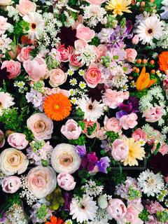 近くの花のアップ - No.749005