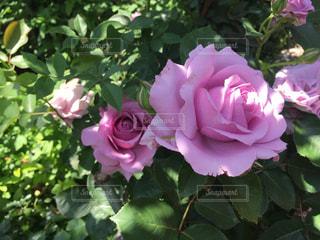 近くの花のアップ - No.749008