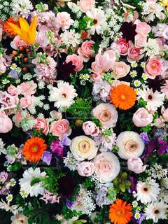 近くの花のアップ - No.759683