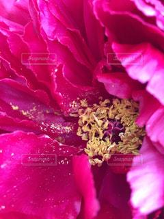 近くの花のアップ - No.759685