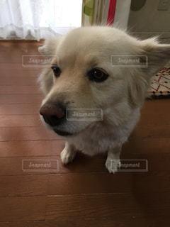 犬の写真・画像素材[428641]