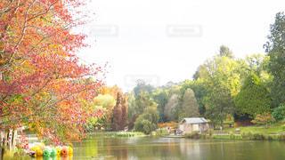 秋の写真・画像素材[491078]