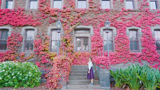秋の写真・画像素材[496338]