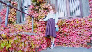 紅葉 - No.496340