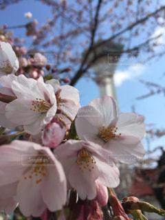 花の写真・画像素材[461903]