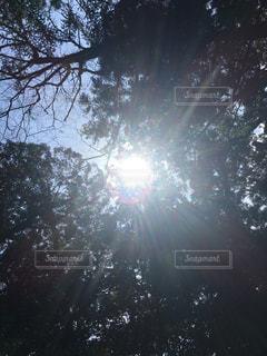 #千年過ぎ#木漏れ日#須佐神社#パワースポットの写真・画像素材[436236]