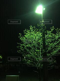 夜の写真・画像素材[438571]