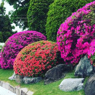 庭園の写真・画像素材[488020]