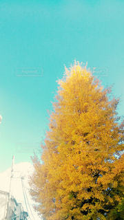 秋 - No.304705