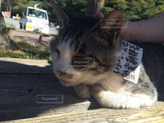 猫の写真・画像素材[305043]