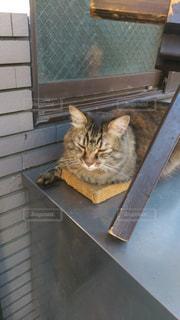 猫の写真・画像素材[305061]