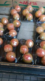 トマトの写真・画像素材[305065]
